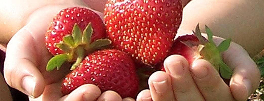 Frutas y Verduras con pesticidas